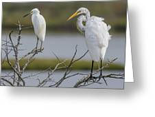 Great Egret And Snowy Egret Perched Greeting Card