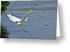 Great Egret Ascending Greeting Card