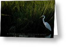 Great Egret At Ft George Inlet  Greeting Card