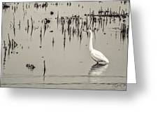 Great Egret At Horicon - B - W  Greeting Card