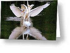 Great Egret Ballet Greeting Card
