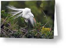 Great Egret Bridal Train Greeting Card