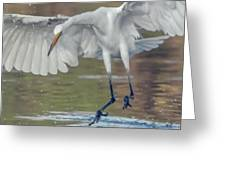 Great Egret Chase 072316-9861-2cr Greeting Card