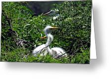 Great Egret Chicks 2 Greeting Card