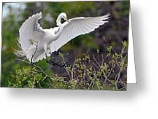Great Egret Coming In For Landing Greeting Card
