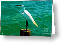 Great Egret Emerald Sea Greeting Card