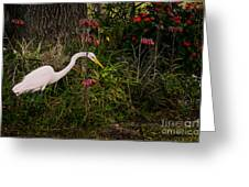 Great Egret In The Garden Greeting Card