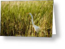 Great Egret In The Morning Dew Greeting Card