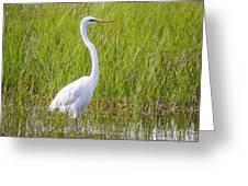 Great Egret In The Spring  Greeting Card