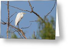 Great Egret In Tree Greeting Card
