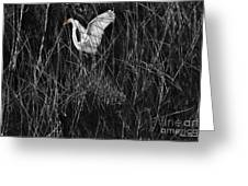 Great Egret Inthe Marsh Greeting Card