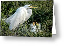 Great Egret Mom And Babies Greeting Card