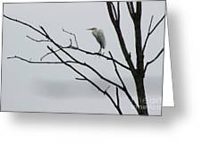 Great Egret On High Greeting Card
