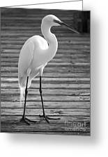 Great Egret On The Pier - Black And White Greeting Card