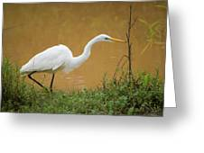 Great Egret On Prowl >> Great Egret On The Prowl Photograph By Mary Ann Artz