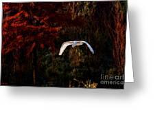 Great Egret Paradise Flight Greeting Card