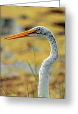Great Egret Profile Greeting Card