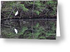 Great Egret Resting Greeting Card