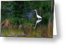 Great Egret Summer Pond Greeting Card