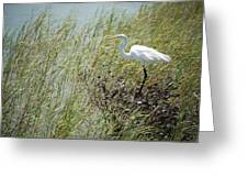 Great Egret Through Reeds Greeting Card