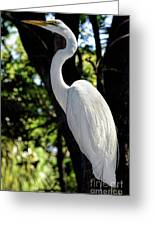 Great Egret Up Close Greeting Card