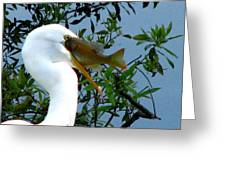 Great Egret With Catch 2 Greeting Card