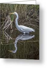 Great Egret With Reflection Greeting Card