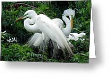 Great Egrets 10 Greeting Card
