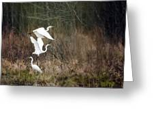 Great Egrets Greeting Card