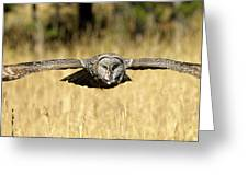 Great Gray Owl In Flight Greeting Card