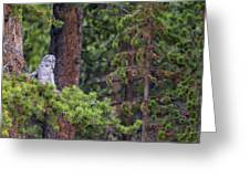 Great Gray Owl Perched Greeting Card