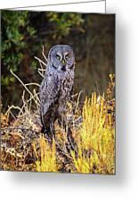 Great Grey Owl Portrait Greeting Card