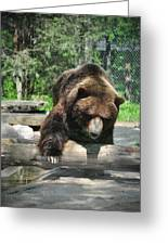 Great Grizzly's Greeting Card