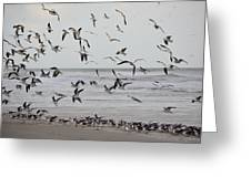 Great Gull Group On The Beach Greeting Card