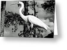 Great Heron Greeting Card