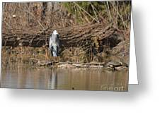 Great Heron Turtles And Grebe Duck  Greeting Card