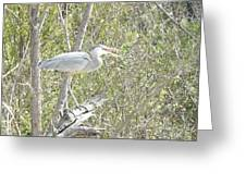 Great Heron With Mouth Open Greeting Card