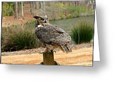 Great Horned Owl 1 Greeting Card