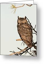 Great Horned Owl At Dusk Greeting Card