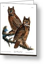 Great Horned Owl Audubon Birds Of America 1st Edition 1840 Royal Octavo Plate 39 Greeting Card