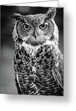 Great Horned Owl Bw IIi Greeting Card