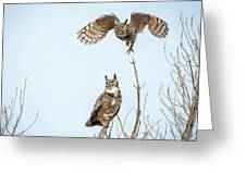 Great Horned Owl Couple Greeting Card