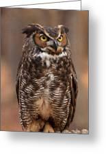 Great Horned Owl Digital Oil Greeting Card