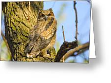 Great Horned Owl Fledgling  Greeting Card