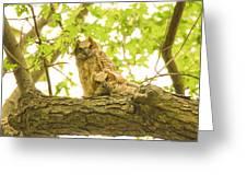 Great Horned Owl Fledglings Greeting Card