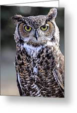 Great Horned Owl IIi Greeting Card