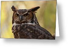 Great Horned Owl In A Tree 1 Greeting Card