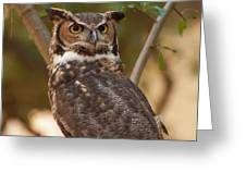 Great Horned Owl In A Tree 3 Greeting Card
