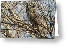 Great Horned Owl In Cottonwood Tree Greeting Card