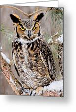 Great Horned Owl Nature Wear Greeting Card
